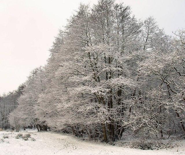 Snow in Flexford