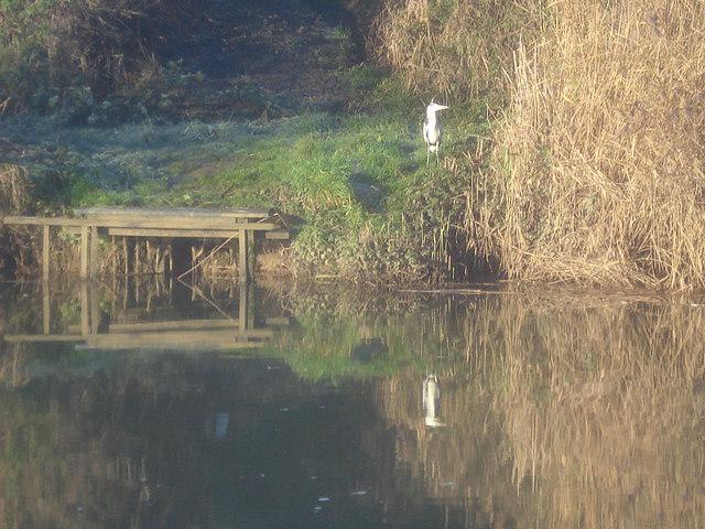 Heron near Bourne Farm - 2