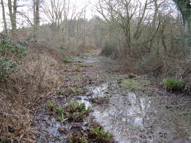 Bridleway or slipway in Birchfield Copse