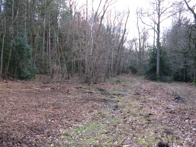 Clearing in Birchfield Copse