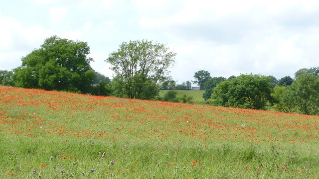 Poppy-covered Landscape Near Chelsham