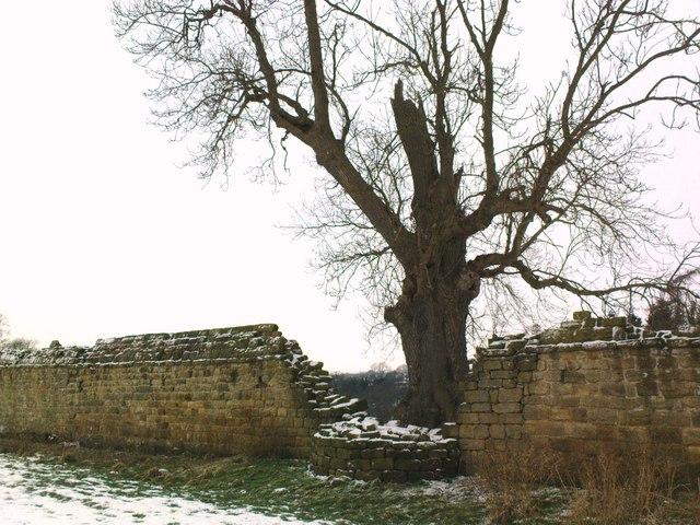 An Ancient Ash