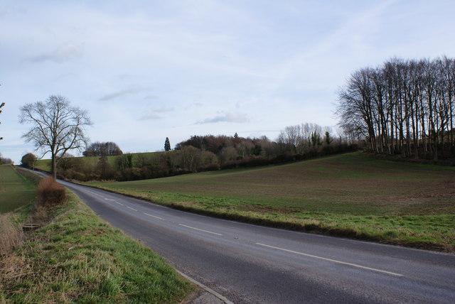 Looking Towards Putcombe Copse