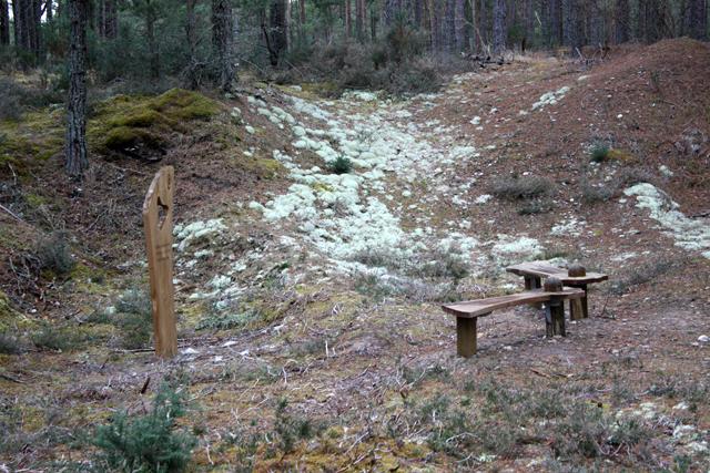 Seats in Culbin Forest
