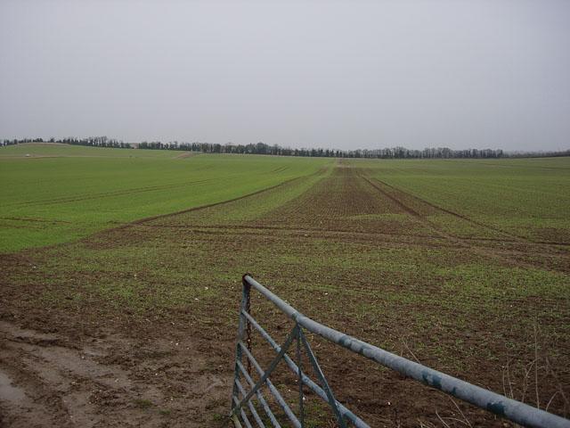 Field near Lodge Farm