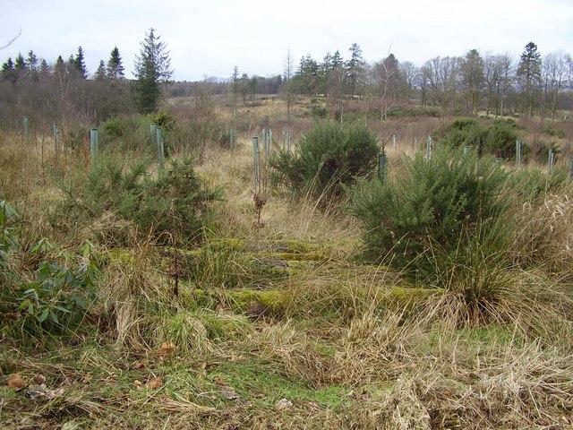 Oglegarth 'Wood'