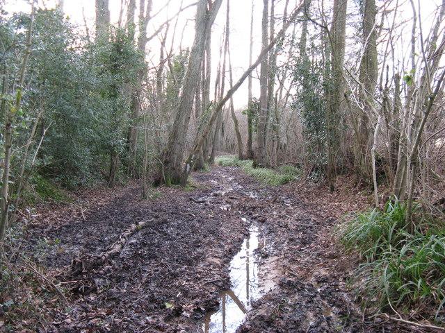 Wet bridleway through Ifold Copse