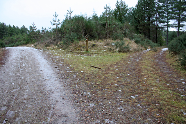Junction 10, Culbin Forest