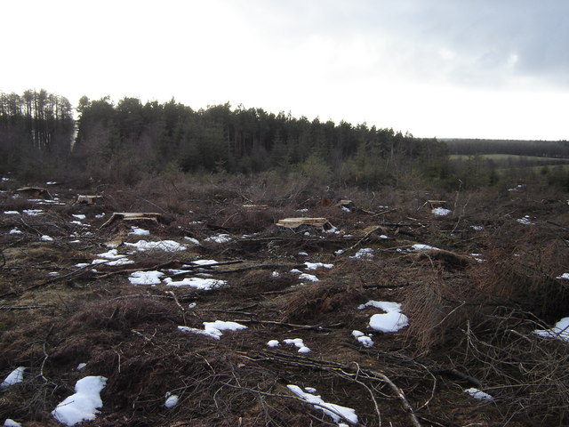Forest  area  cut  and  cleared
