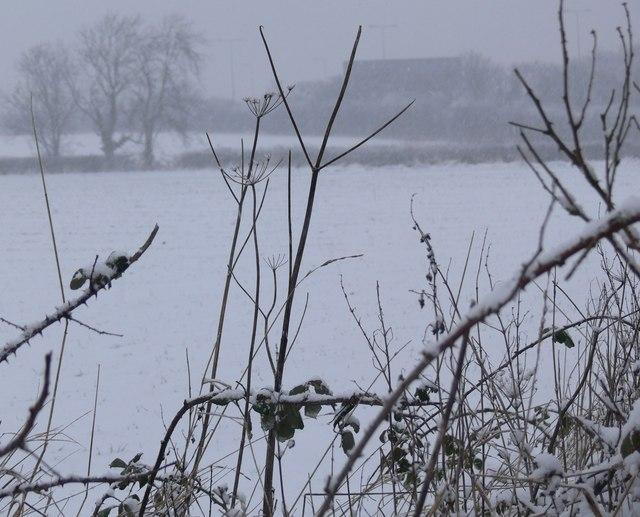 Snowy farmland near the M1 Motorway