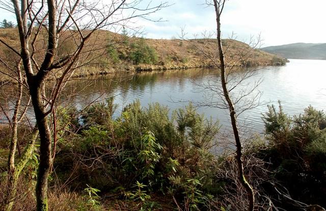 Loch Allan Shores