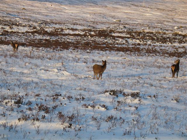 Feeding deer by the A82