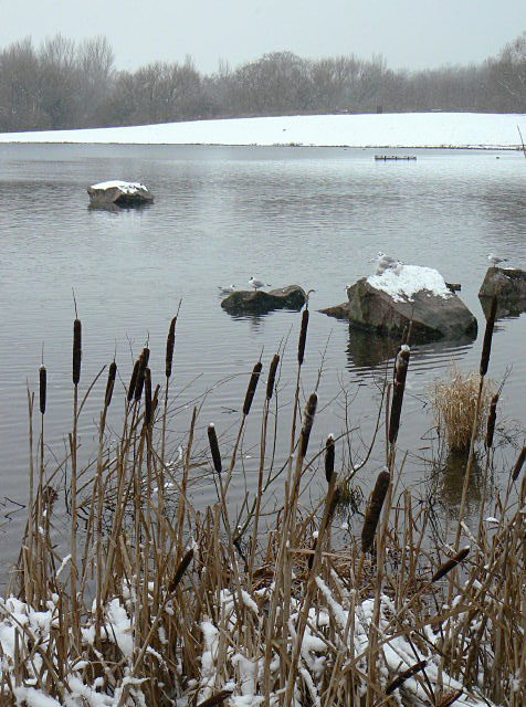 Colwick Country Park in the snow
