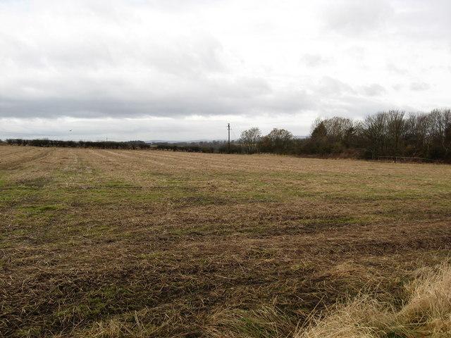 Winter grazing near East Newbiggin