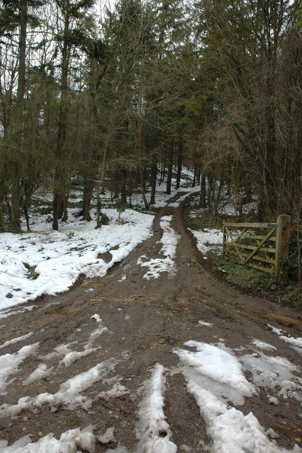 Entrance to Leigh Wood