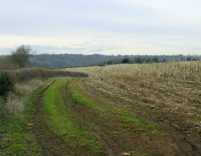 2009 : Harvested maize field