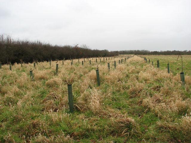 Trees on field edge
