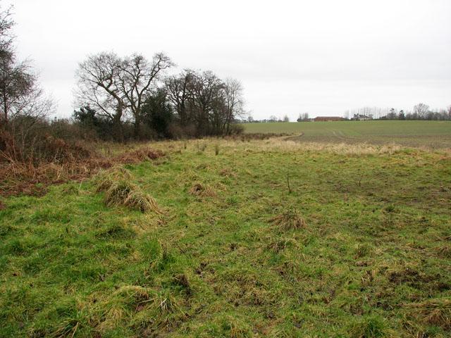 View alongside a field's edge