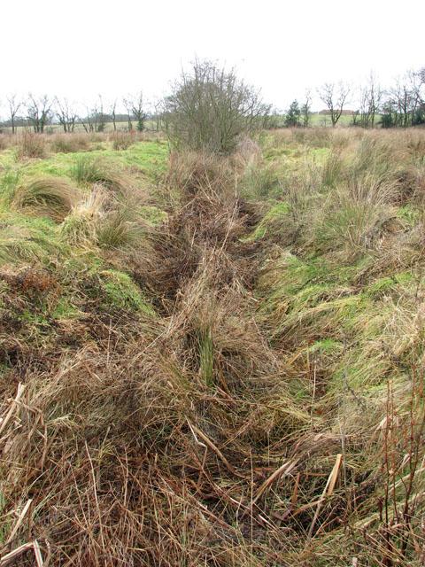 Overgrown drain