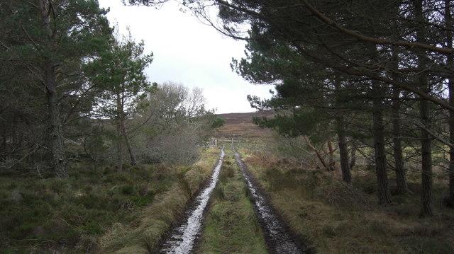 Track from Kilmain