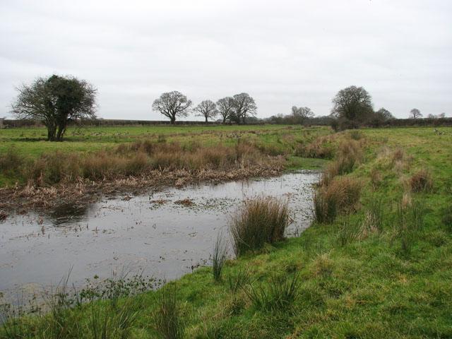 Drain in sheep pasture