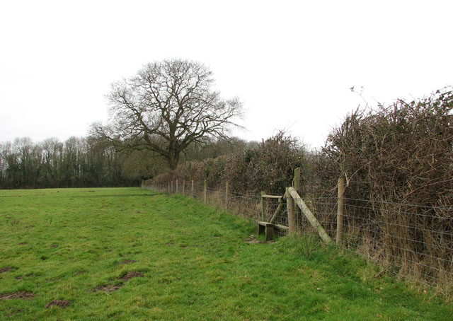 View along a field/pasture boundary