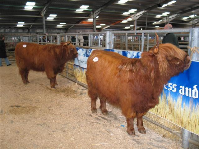 Oban Livestock Market