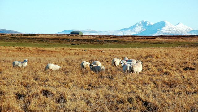 Rough Grazing at Rubha Buidhe