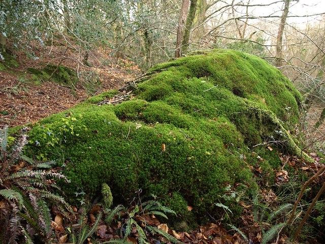 Mossy root-soil plate below Little Haldon