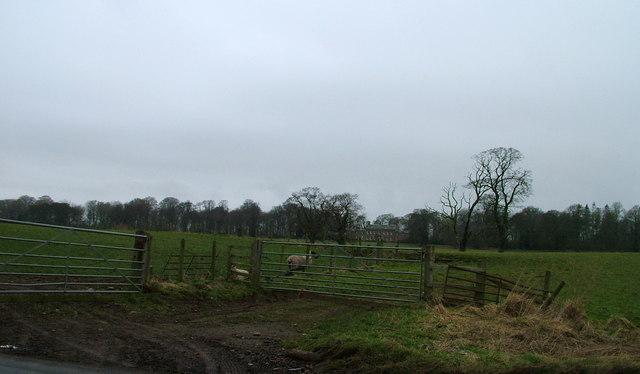 Fields near Castlesteads