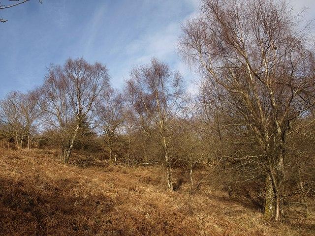 Birches, Little Haldon