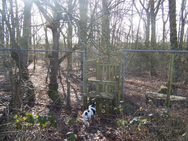 Stile into Snarkhurst Wood