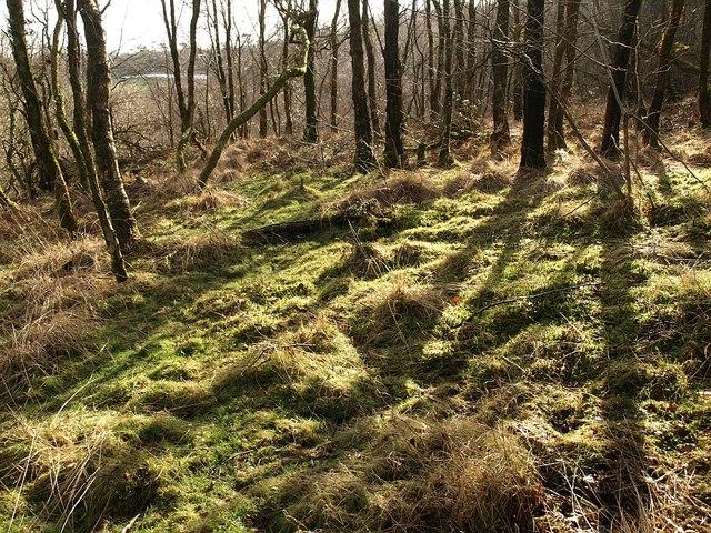 Woodland below Little Haldon