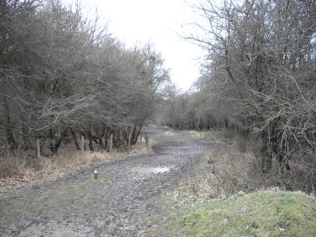 Muddy Path in Collin's Coppice