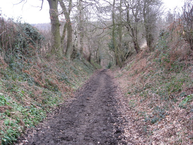 Track to Eckington Woods