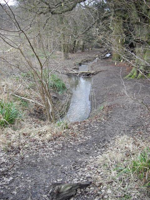 Overflow Stream at Hatfield Forest
