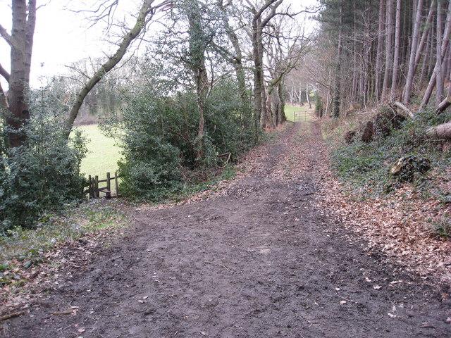 Cadman Wood - Footpath Junction
