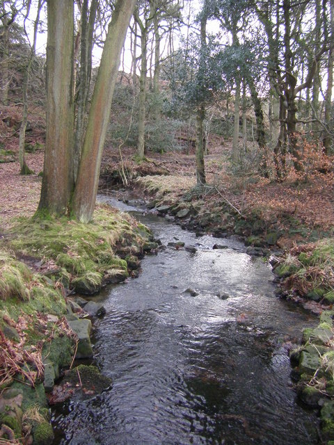 River Conder, Gibson Wood
