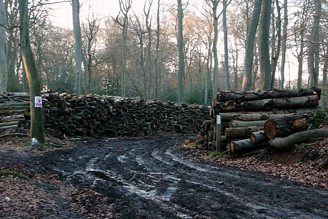 Timber operations in Nuney Copse