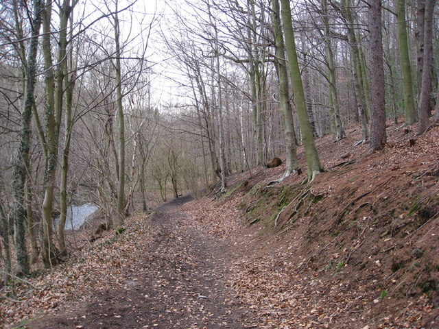 Cadman Wood - Track and The Moss (Brook)
