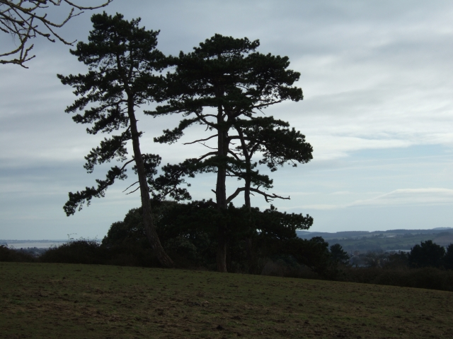 Trees seen from Hillcrest Park, Exeter