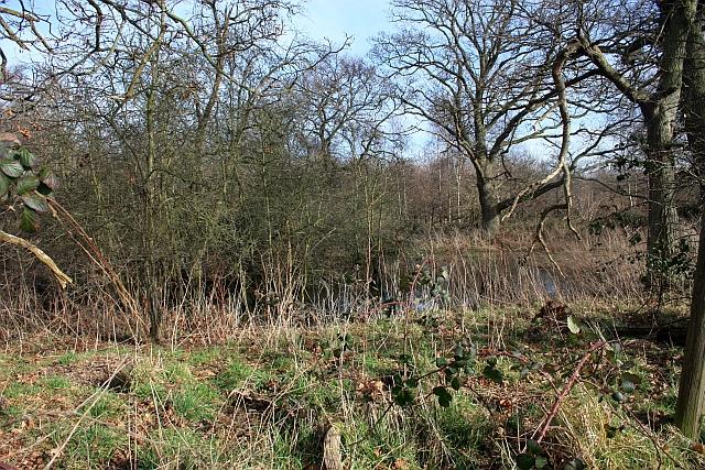 Pond near Arles Wood
