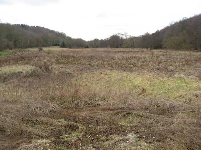 Marshland between New Piece Wood and Ladybank Wood