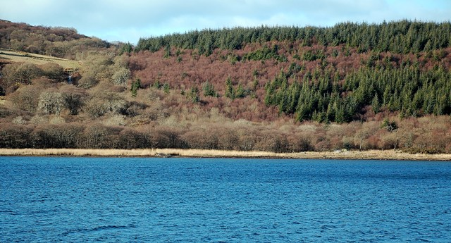 Wooded Shore Of West Loch Tarbert