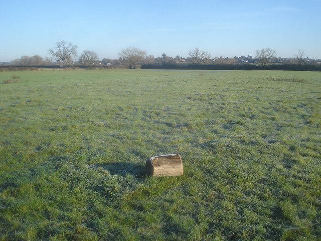 Water meadow near Eckington