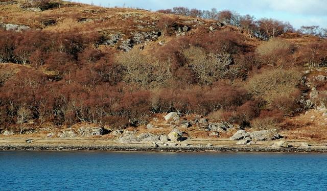 Wooded West Loch Tarbert