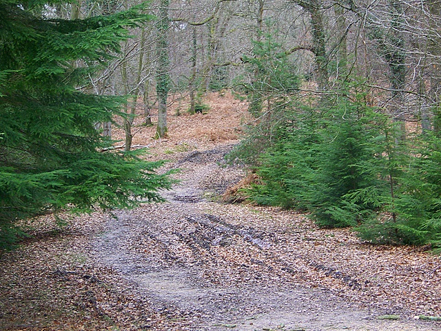 Track to Islands Thorns Inclosure