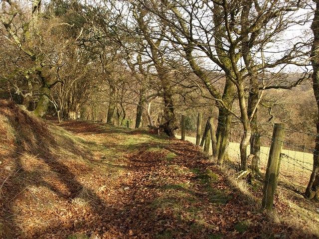 Path along edge of access land, Little Haldon