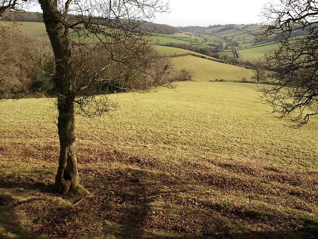 Field below Little Haldon