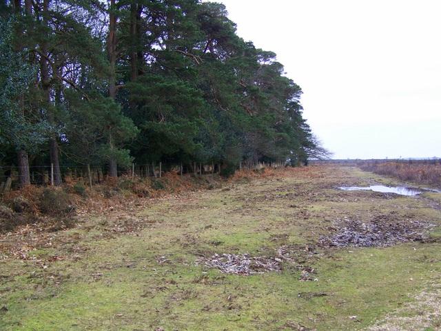 Woodland Edge